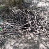 madriguera-de-vizcacha-6