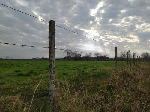 El-campo-alambrado-y-el-cielo-nublado-con-una-luz-alumbrando-los-arboles.jpg