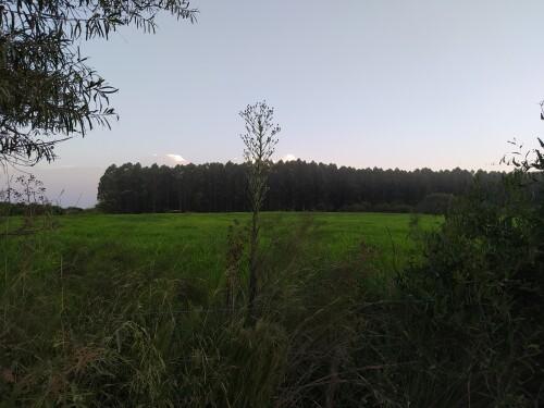 Un-paisaje-con-un-verde-intenso.jpg