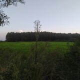 Un-paisaje-con-un-verde-intenso