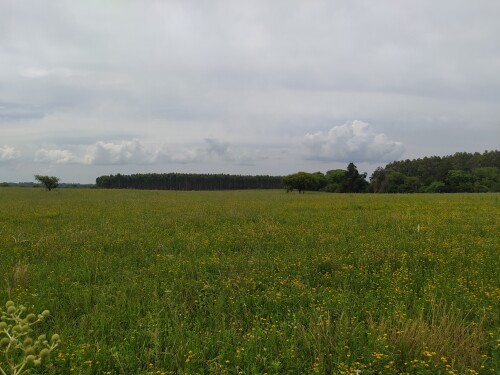 Un-atardecer-nublado-en-el-campo-con-flores-amarillas.jpg
